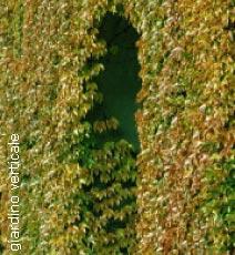 Immagine esempio di giardino verticale
